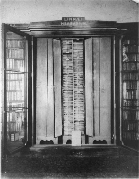 Herbarium-CabinetLinnSoc.jpg