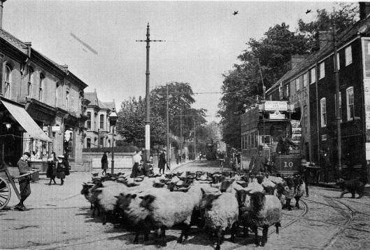 Norwich tram.jpg