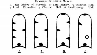 Swan beak markings.jpg