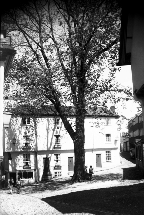 Elm Hill elm tree prior to felling [5925] 1978-07-25.jpg