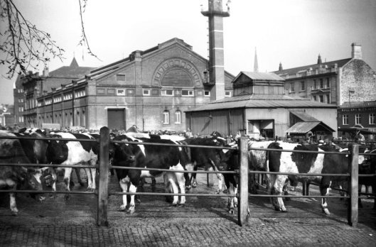 Cattle Market view NE from Market Avenue [4541] 1960-03-12.jpg